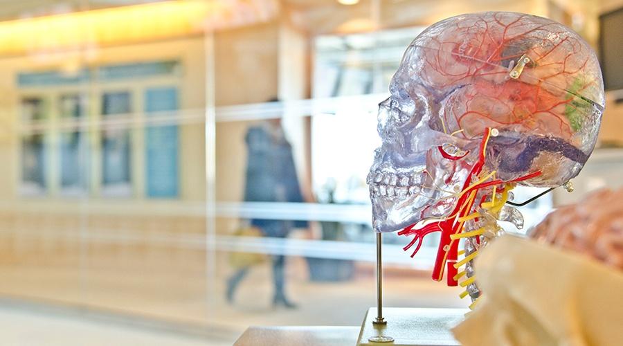 Traumatic Brain Injury Recovery: How to Heal